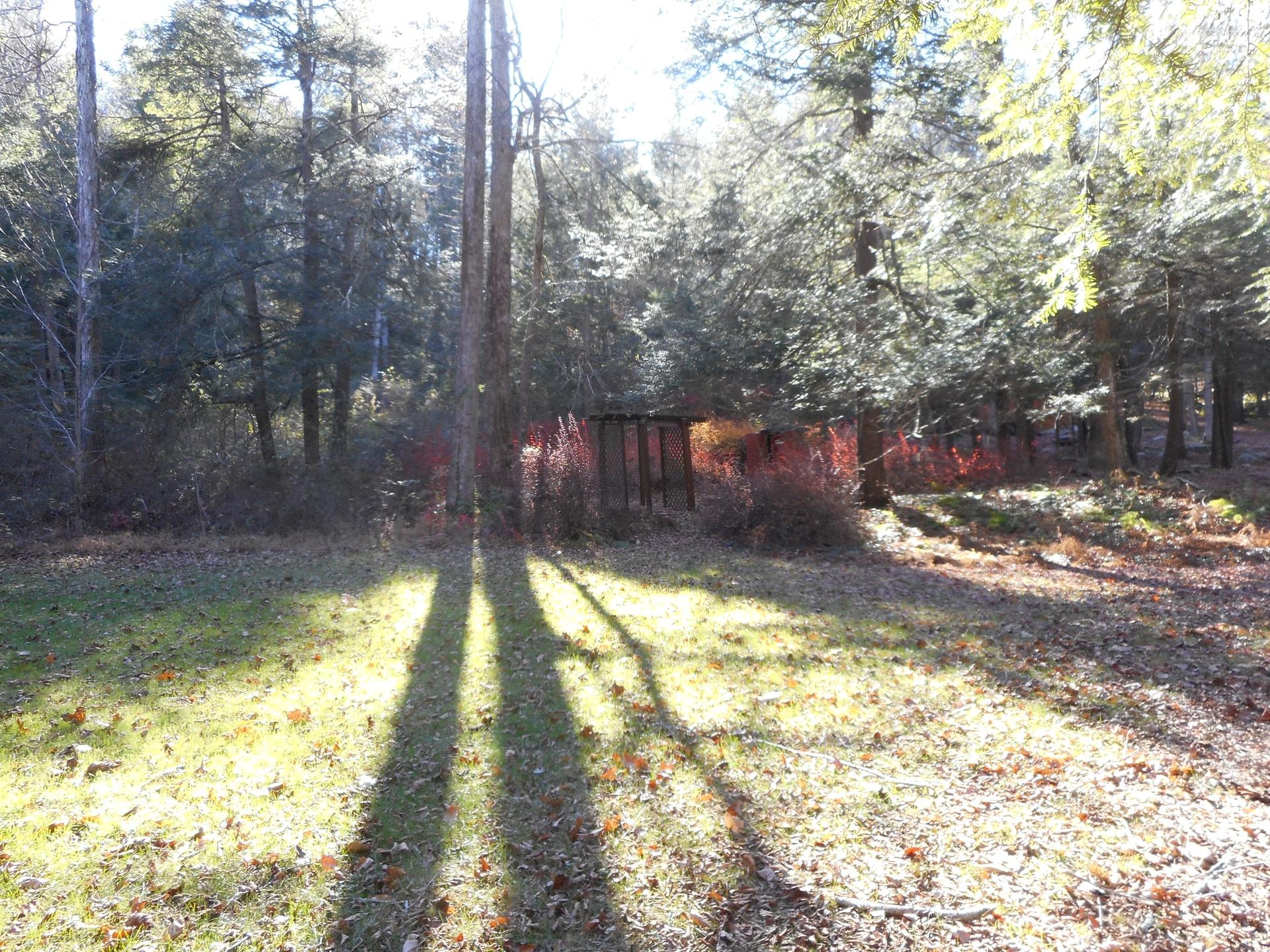 Fall on Gil's Land November 2016 (2)
