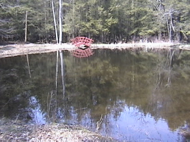 Pond on the land